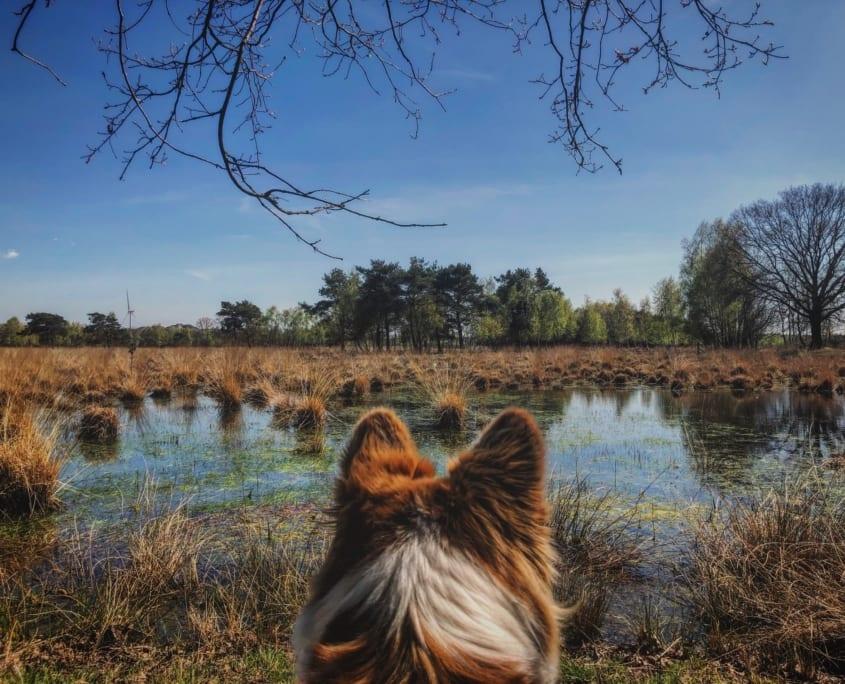 Een tevreden hondje na een mooie hondenwandeling
