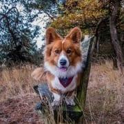 De schattigste hond allertijden