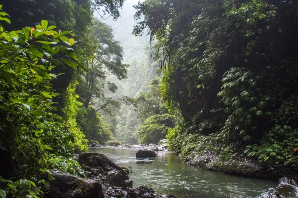 Je vindt wel een hoop rust in de jungle van Bali.