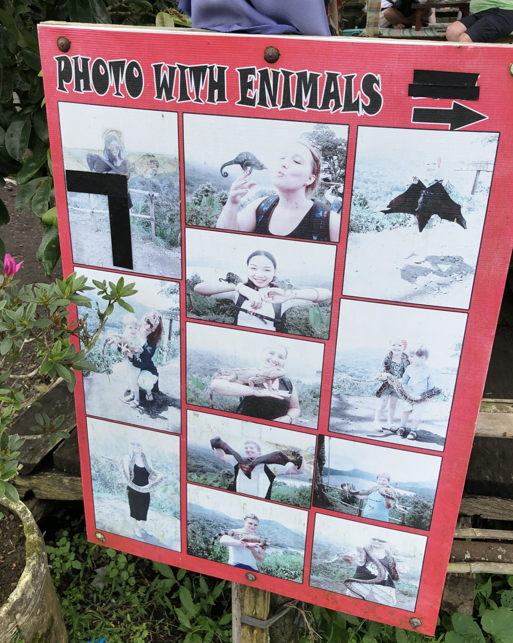 Foto's met dieren