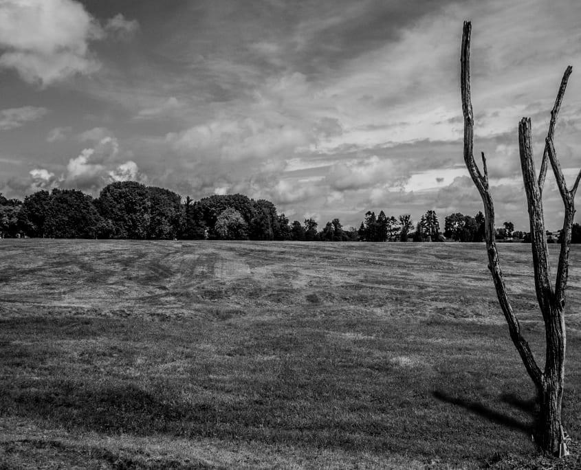 De replica van de kapotgeschoten Danger Tree op het slagveld van Beaumont-Hamel