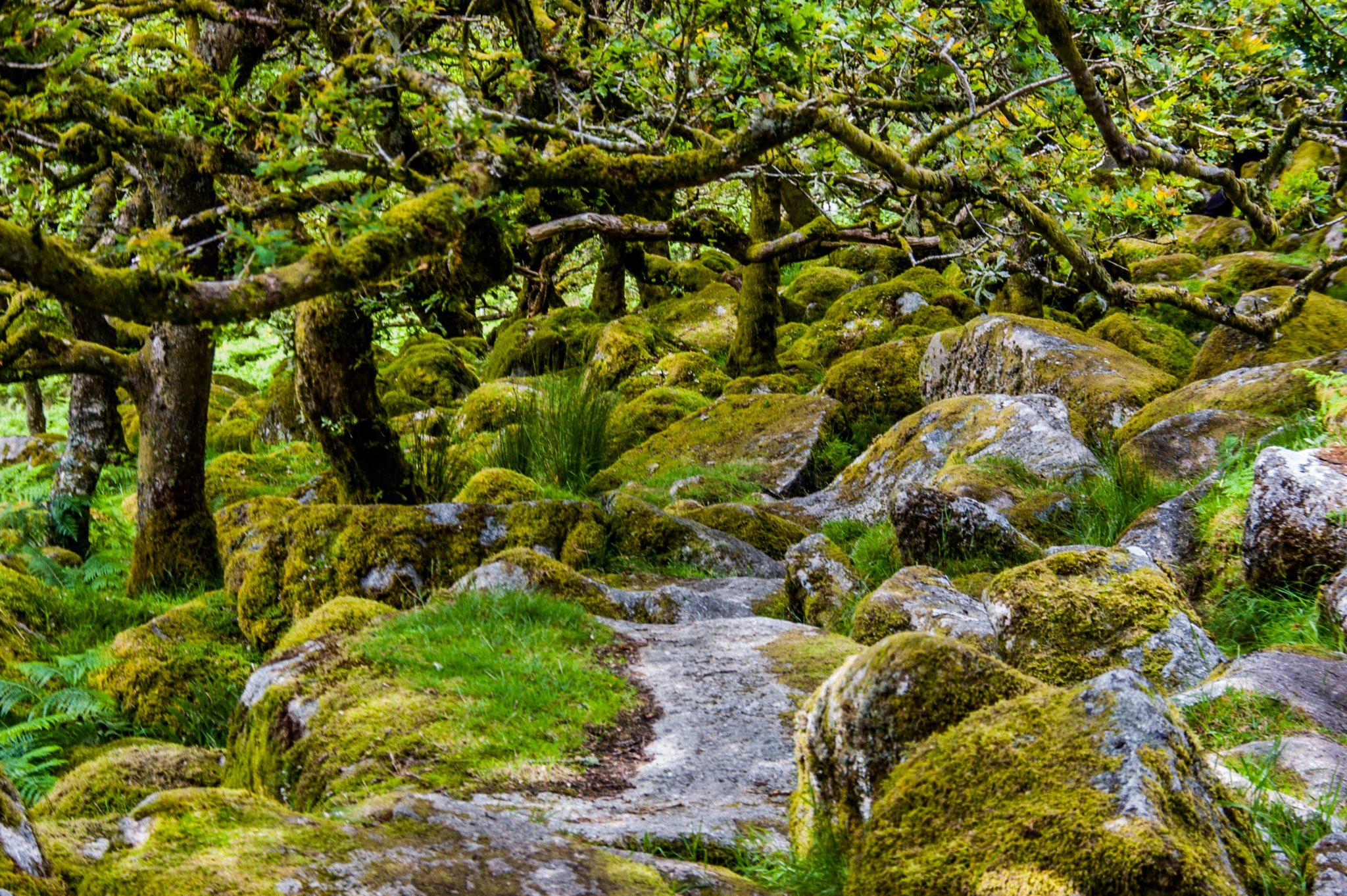Het mystieke Whistman's Wood