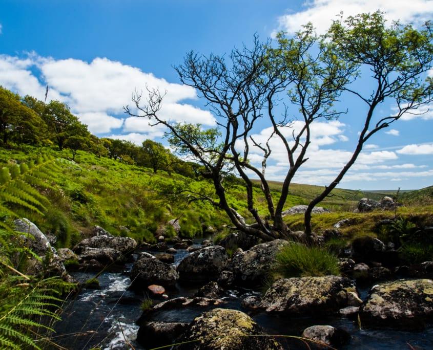 De rustieke natuurlijke landschappen van Zuid-Engeland