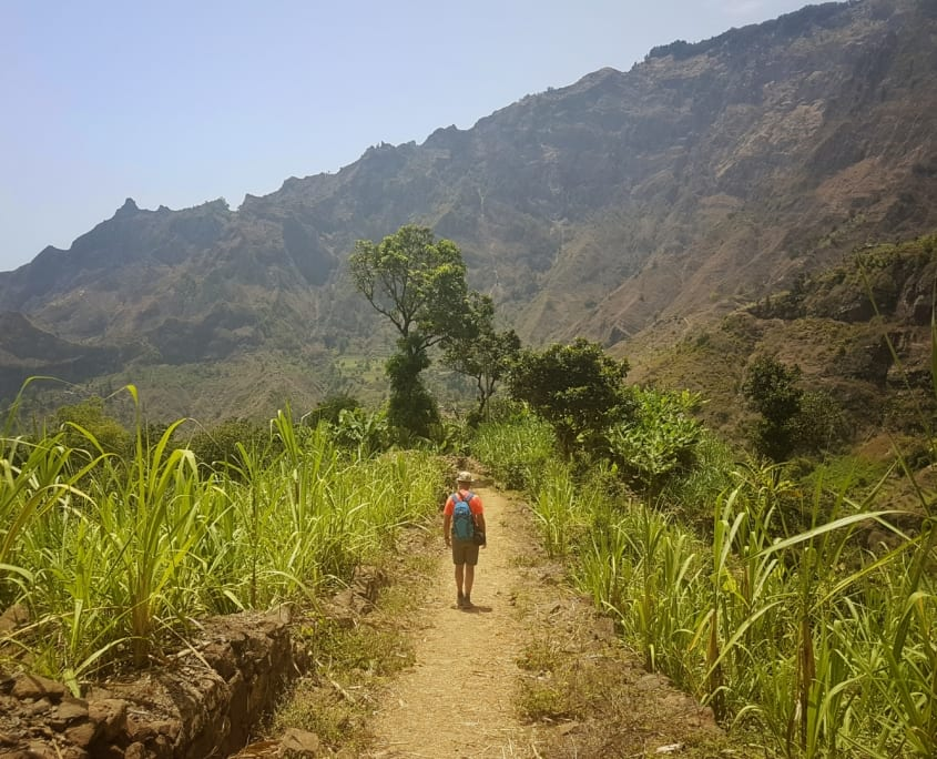 Onderweg door de suikerrietplantages