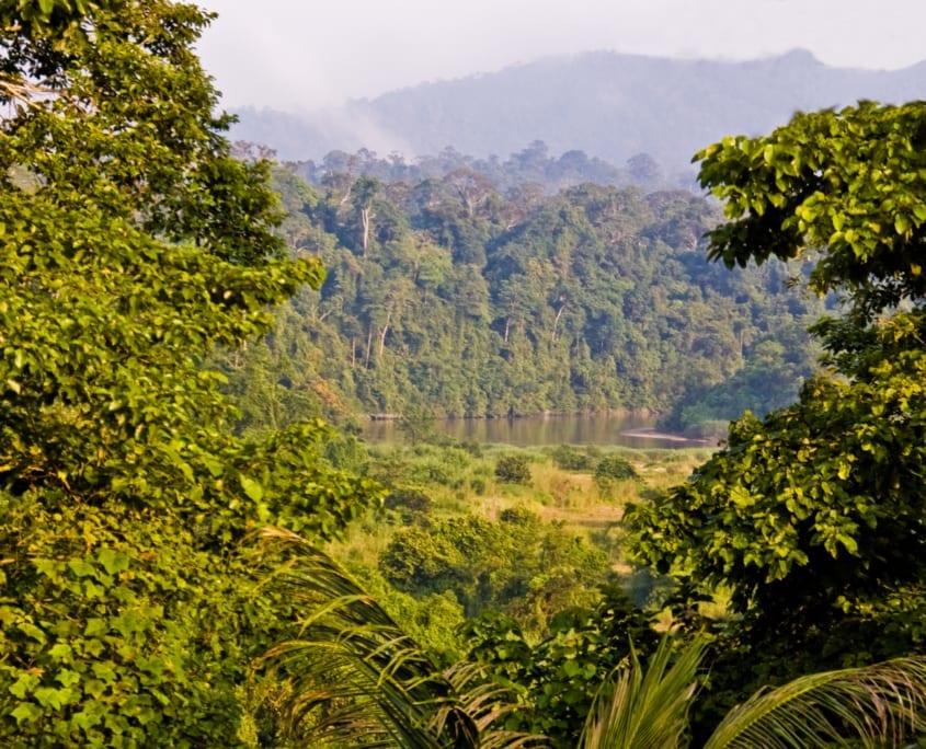 De jungle van Maleisië; Taman Negara