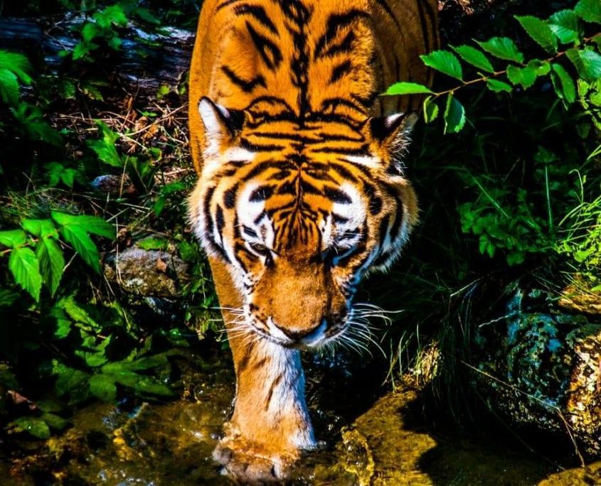 Een van de mooiste dierentuinen ter wereld staat in Oost-Duitsland: de Leipziger Zoo