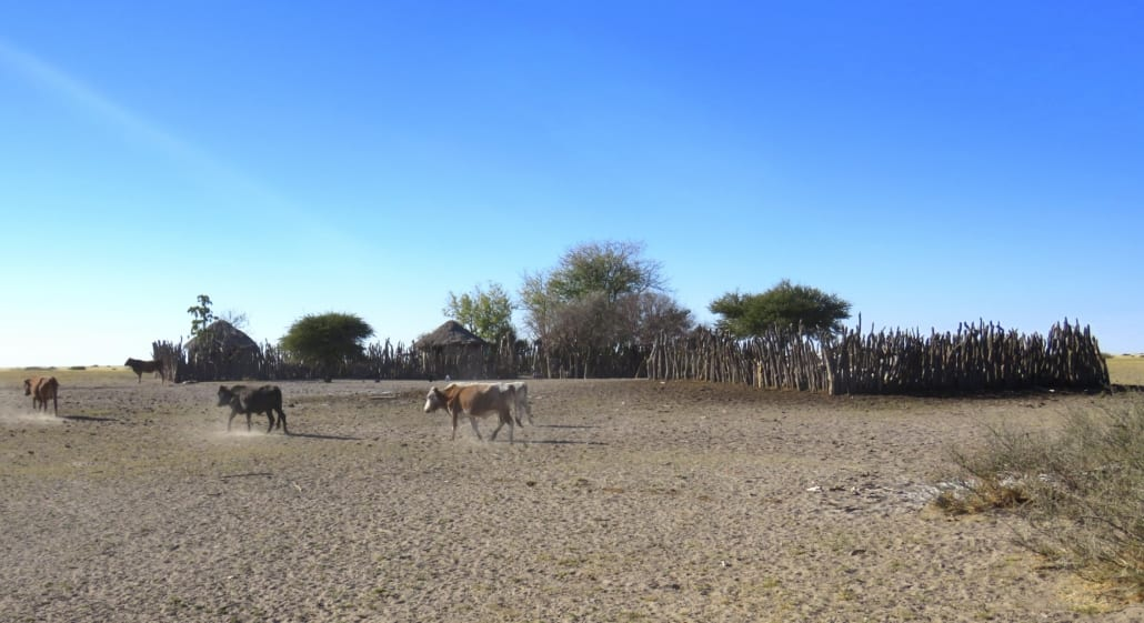 Teken van leven in de middle of nowhere in Botswana