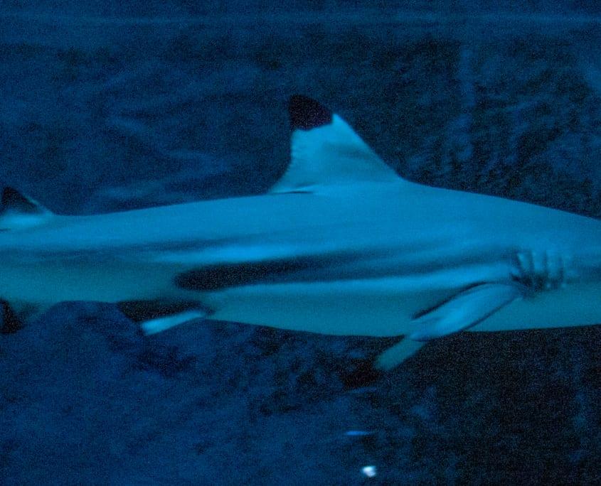 Haaien op ooghoogte in de Leipziger Zoo