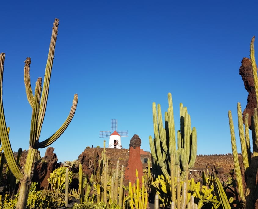 Jardin de Cactus op Lanzarote