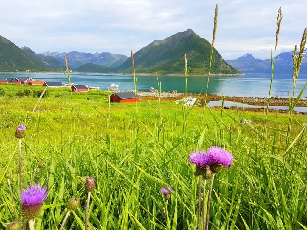 Sifjord aan de rand van Ånderdalen op Senja