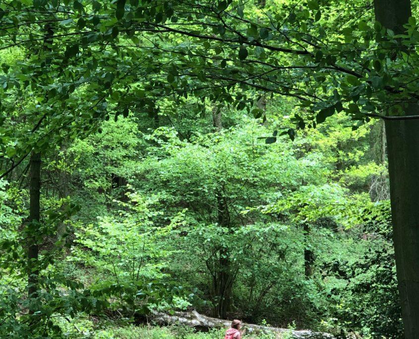 Dagtocht in een Zuid-Limburgs bos