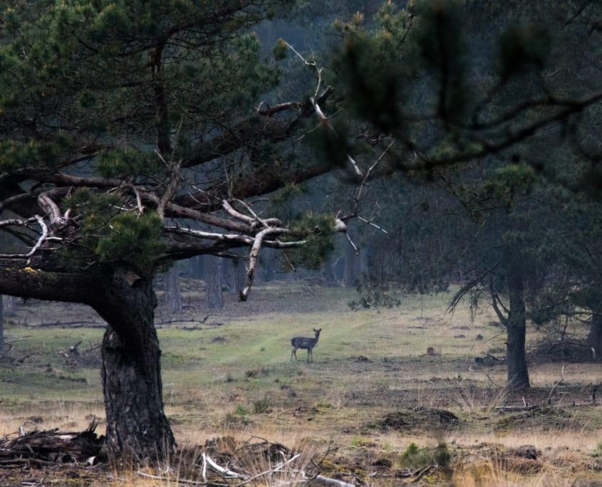 Een dagtocht naar de Veluwe: ideaal om ook wat schuwer wild te spotten.
