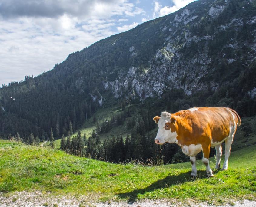 Het Beierse local wildlife