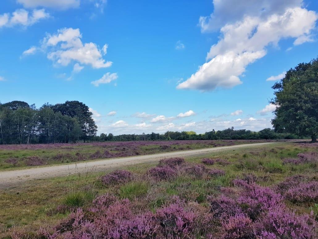 Buurserzand tijdens fietstocht door Zuidoost-Twente en de Achterhoek