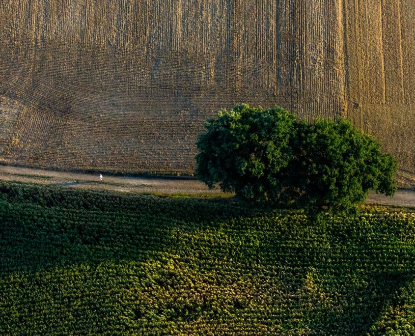 glijdend ver boven de boomgrens tijdens je ballonvaart.