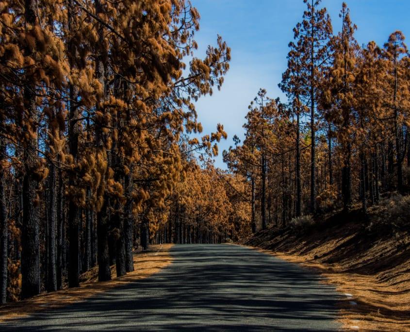 Gran Canaria is nogal veelzijdig; op de top van de Pico de las Nieves is 't plotseling herfst.
