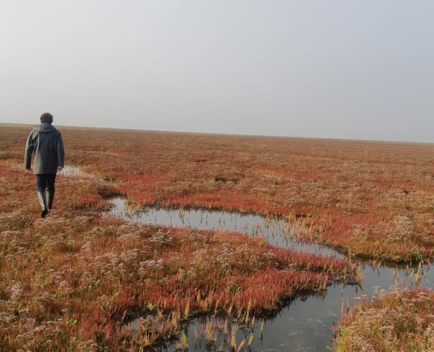 Schiermonnikoog: Wad een eiland