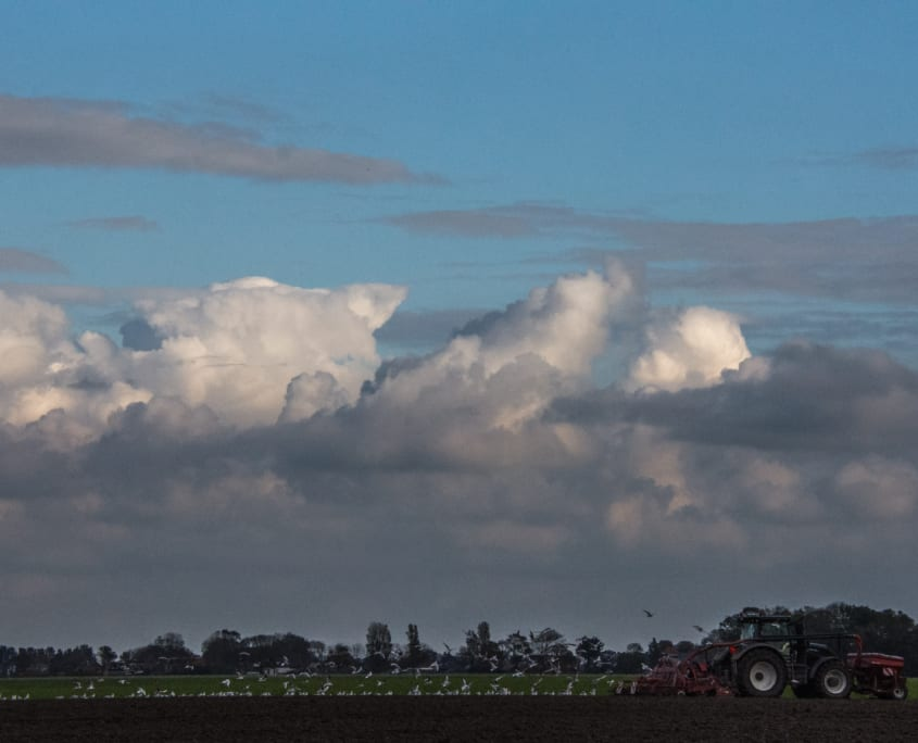 Oogstseizoen in Friesland