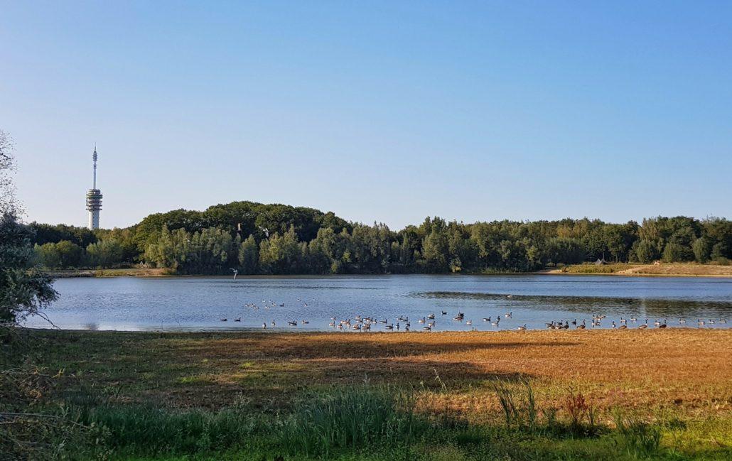 Wandelen rondom Tilburg: ganzen in de Noorderplas
