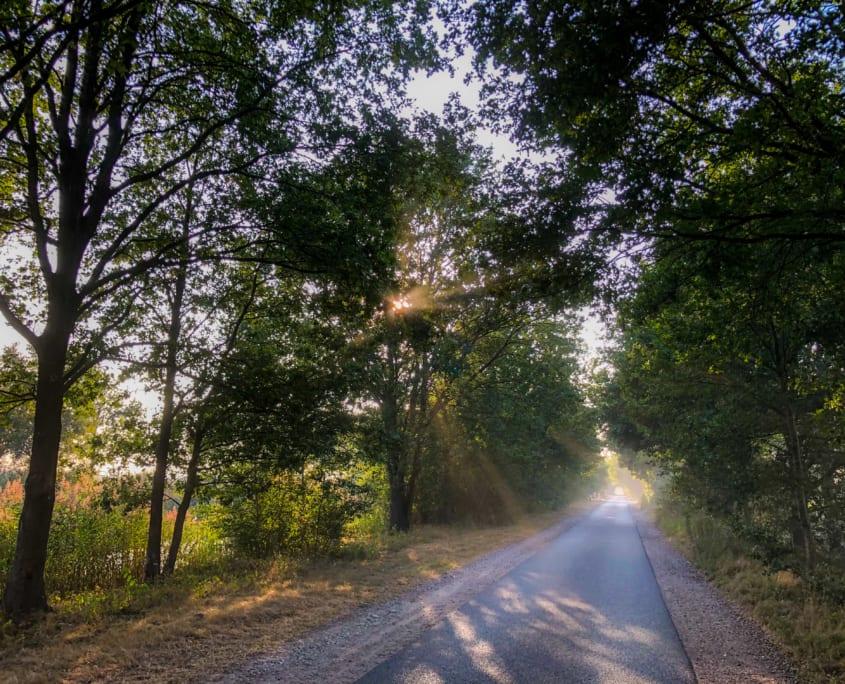 Wielrennen in Noord-Brabant is genieten op een racefiets.
