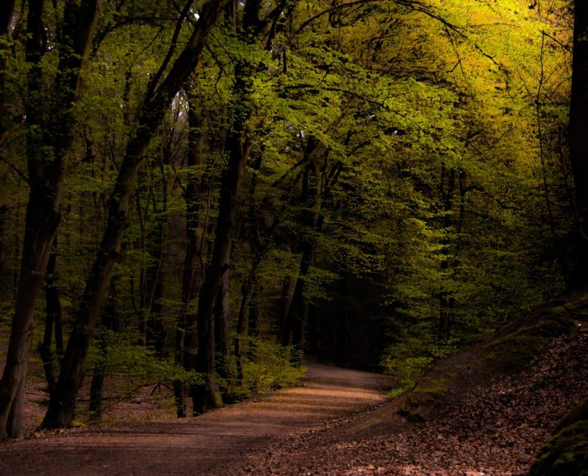 Het sprookjesachtige bos op de Sint Jansberg
