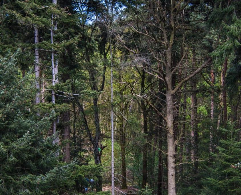 Imposant hoge bomen kom je tegen tijdens je wandeling over de Mokerheide.