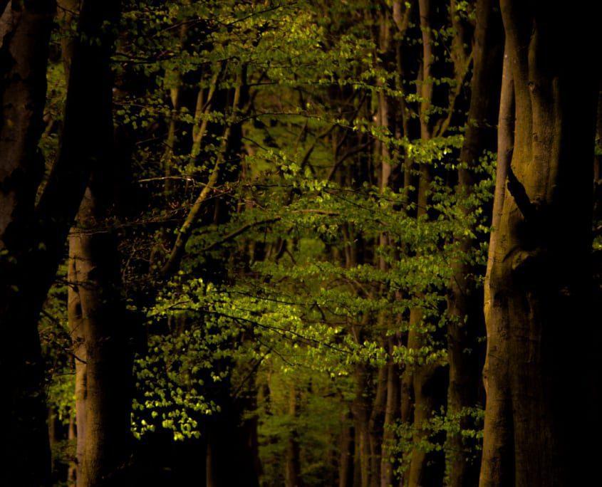 Fraaie lanen in de bossen van de Maasduinen.